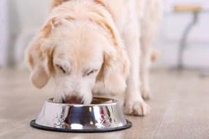 dog-eating-shutterstock_344752013