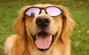 dog-sunglasses